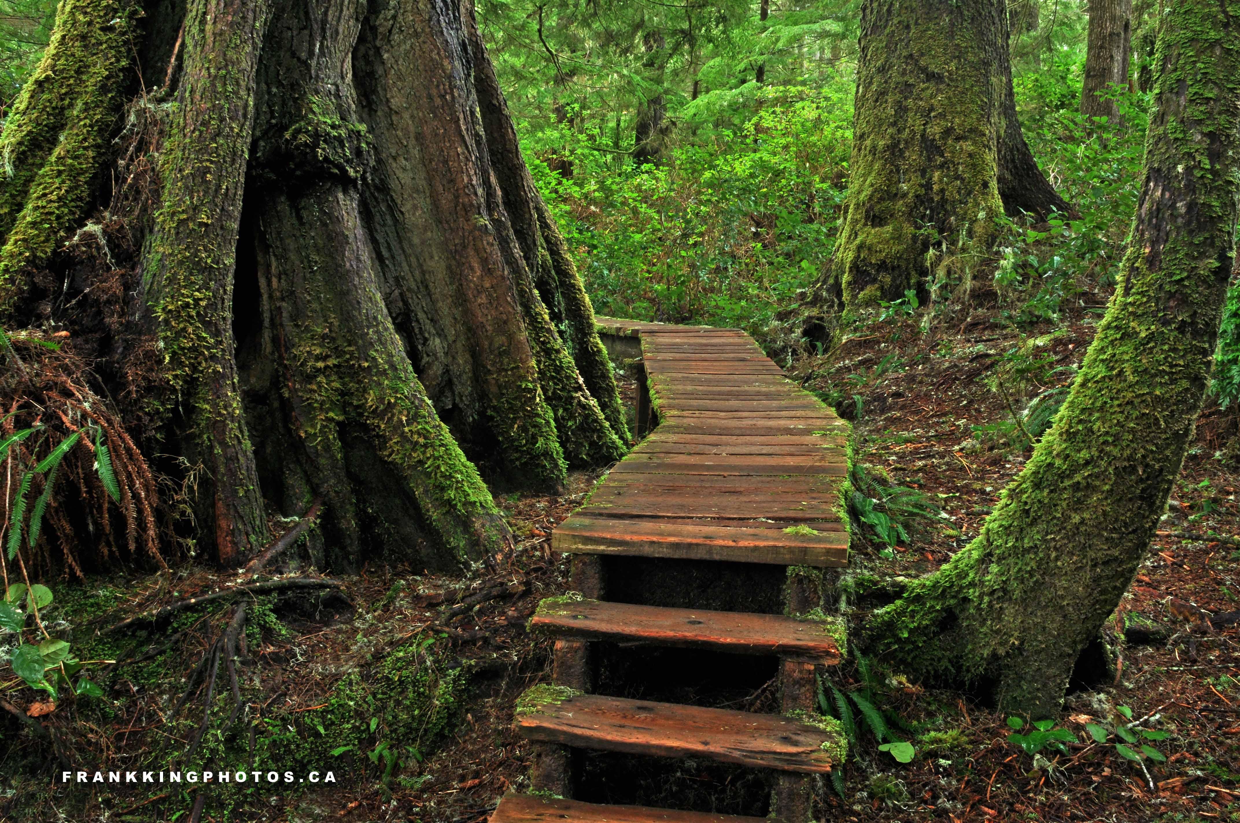Natural landscapes schooner cove trail frank king photos for Natural landscape