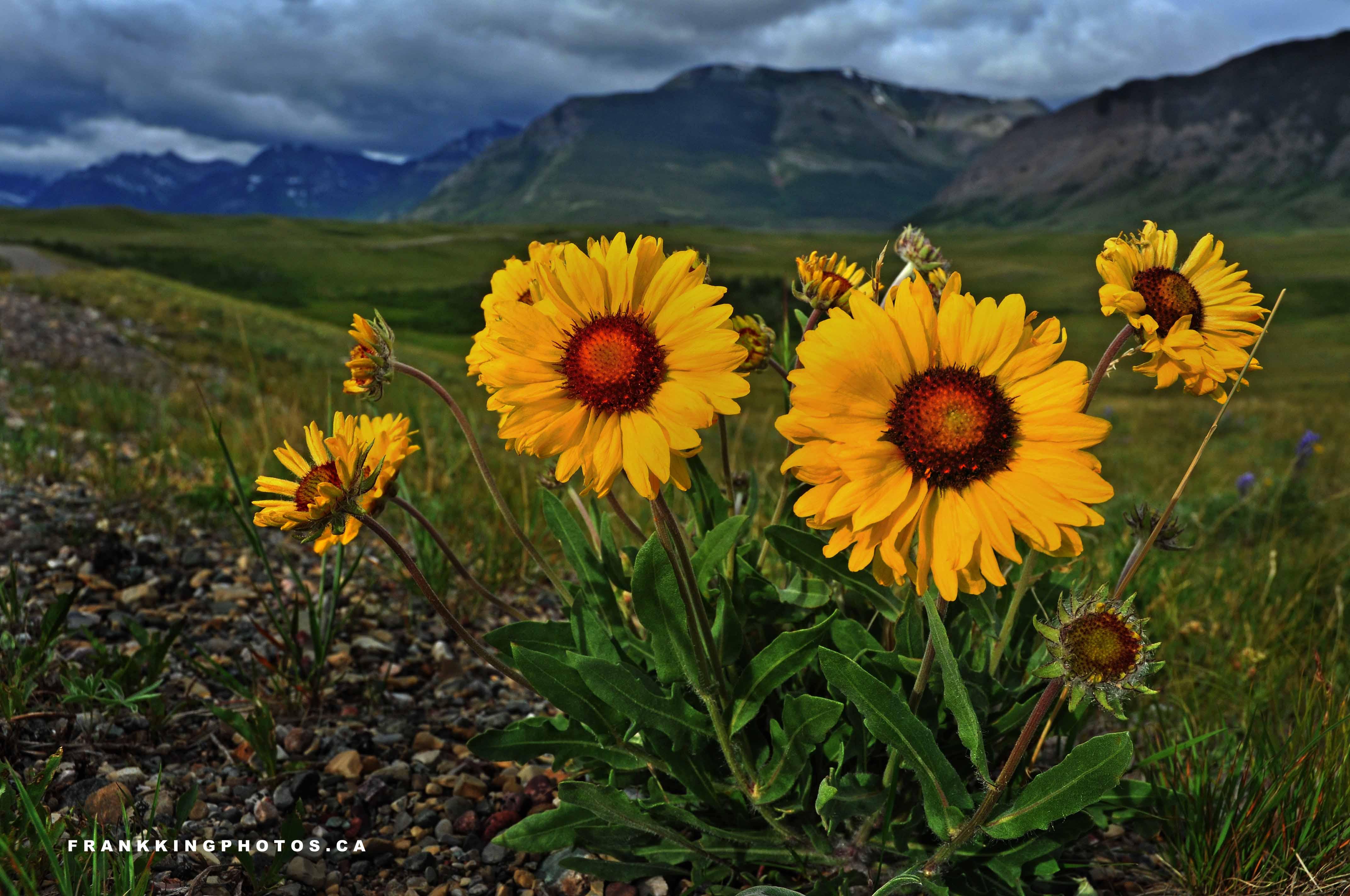 Natural landscapes wind blown flowers frank king photos for Natural landscape