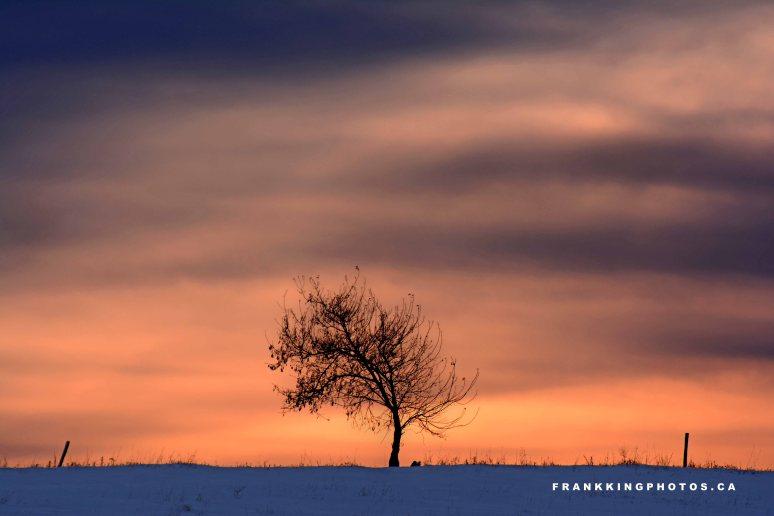 Prairie sunrise Alberta
