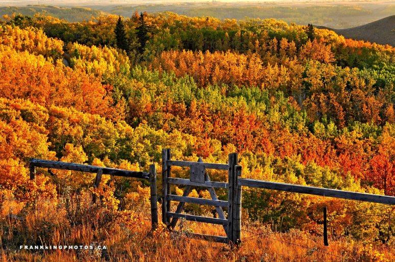 Alberta autumn Glenbow Ranch