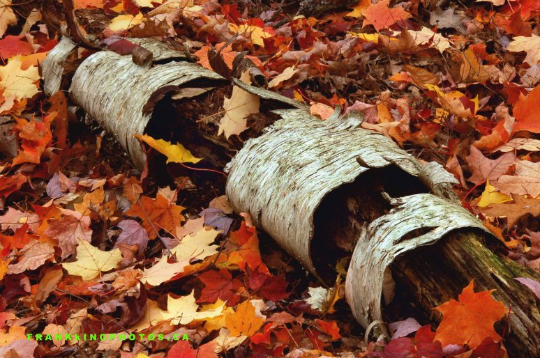 Greenwood autumn Web1
