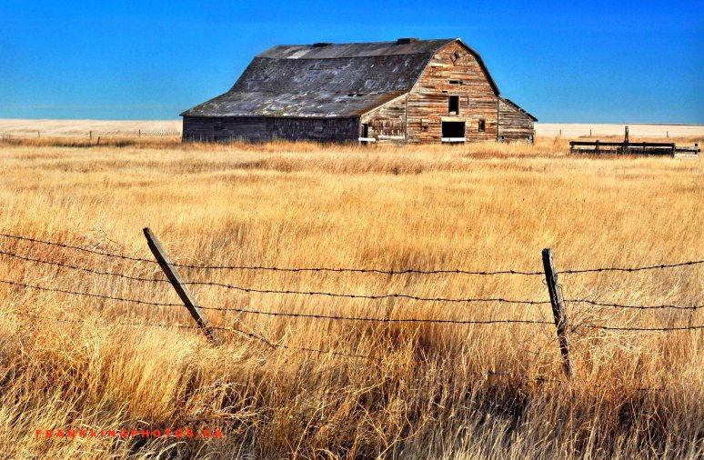 PrairieWeb1