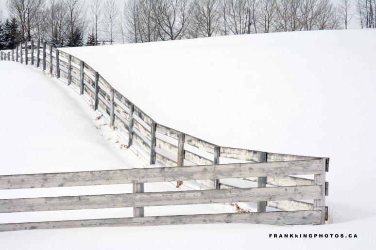 winterfenceweb1