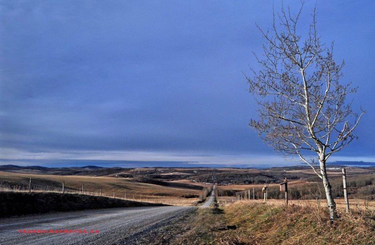 Canada Alberta prairies spring