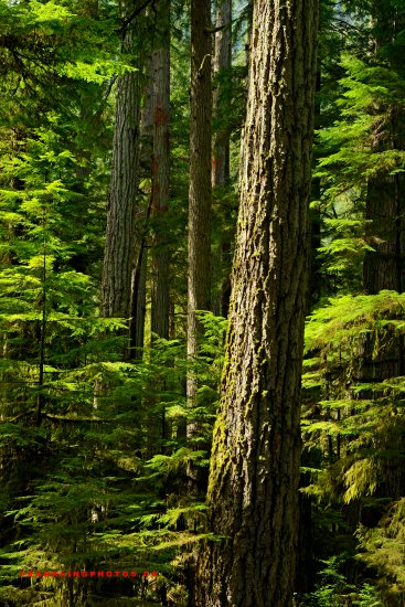 Canada rainforest British Columbia