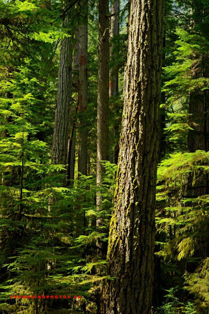 Canada rainforest British Columbia