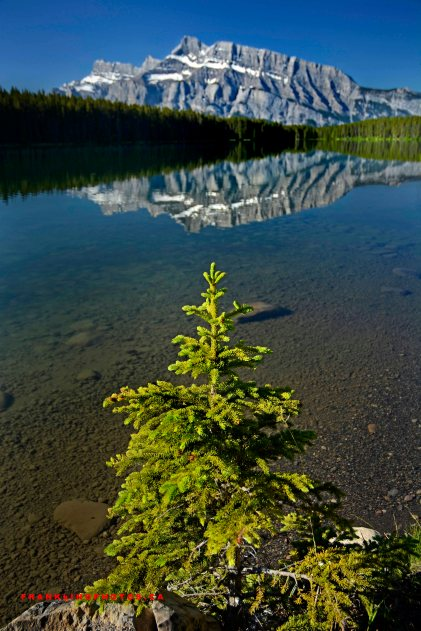 Canadian rockies, lake, summer