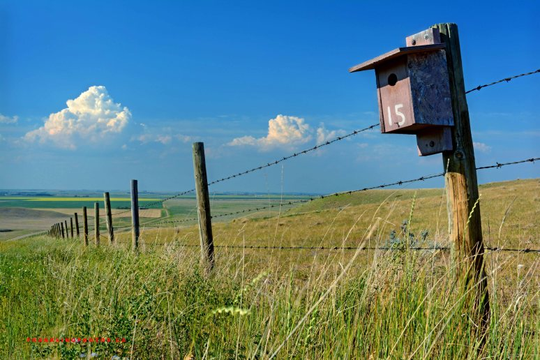 birdhouse Canada prairies summer