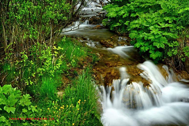Forest stream Canada Alberta