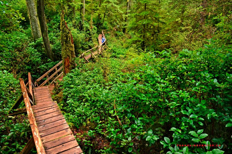 Rainforest Canada British Columbia