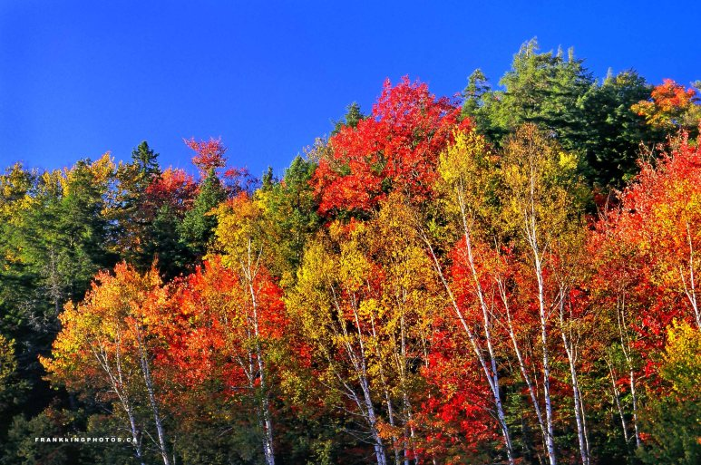 Algonquin autumn Ontario Canada