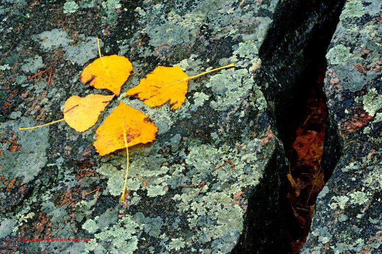 autumn Deep River Canada