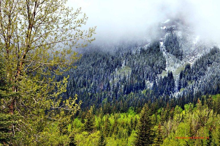 Banff spring snow Canada Rockies