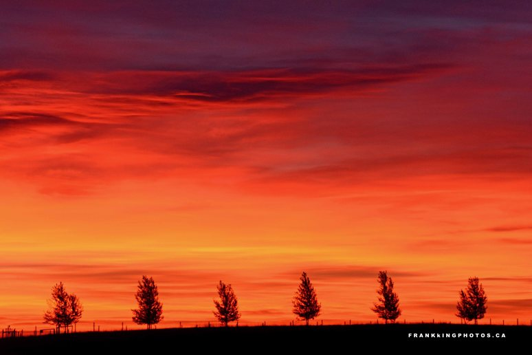 Alberta prairie sunrise
