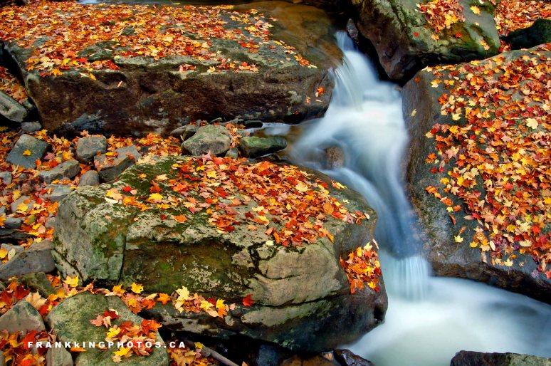 autumn creek canada
