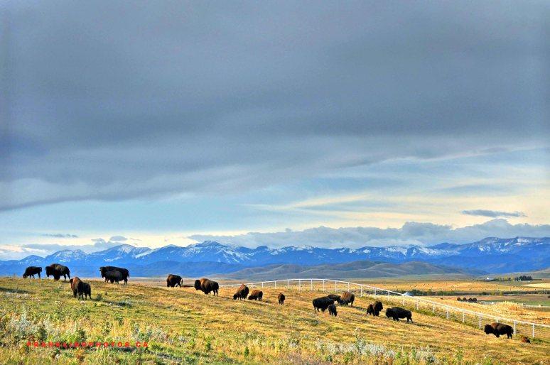 Buffalo Rockies Canada