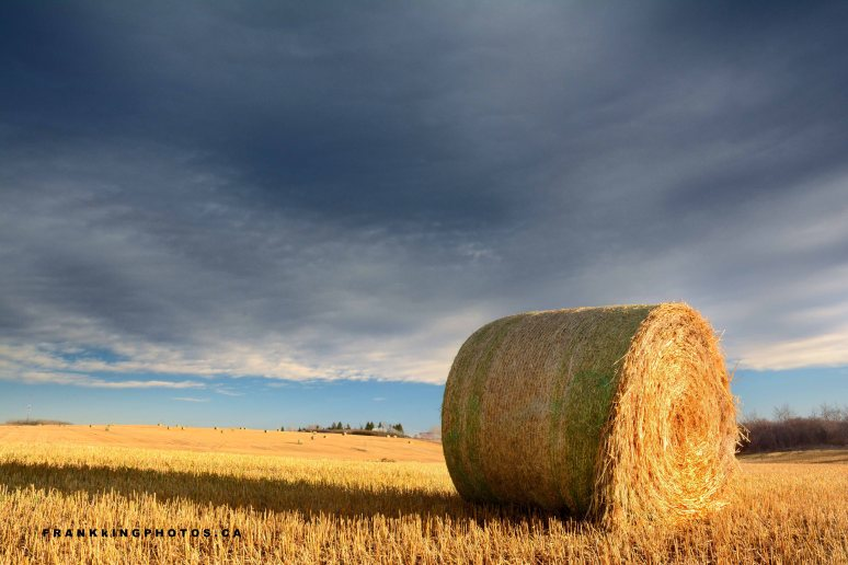 hay roll dark sky prairies Canada