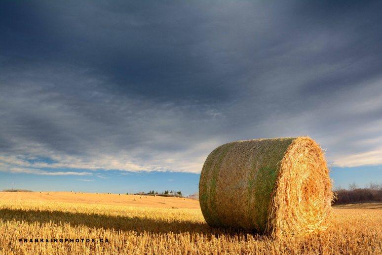 hay roll dark sky prairies Canada