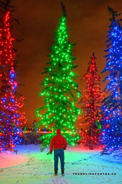 Chrismas lights Canada Calgary Xmas