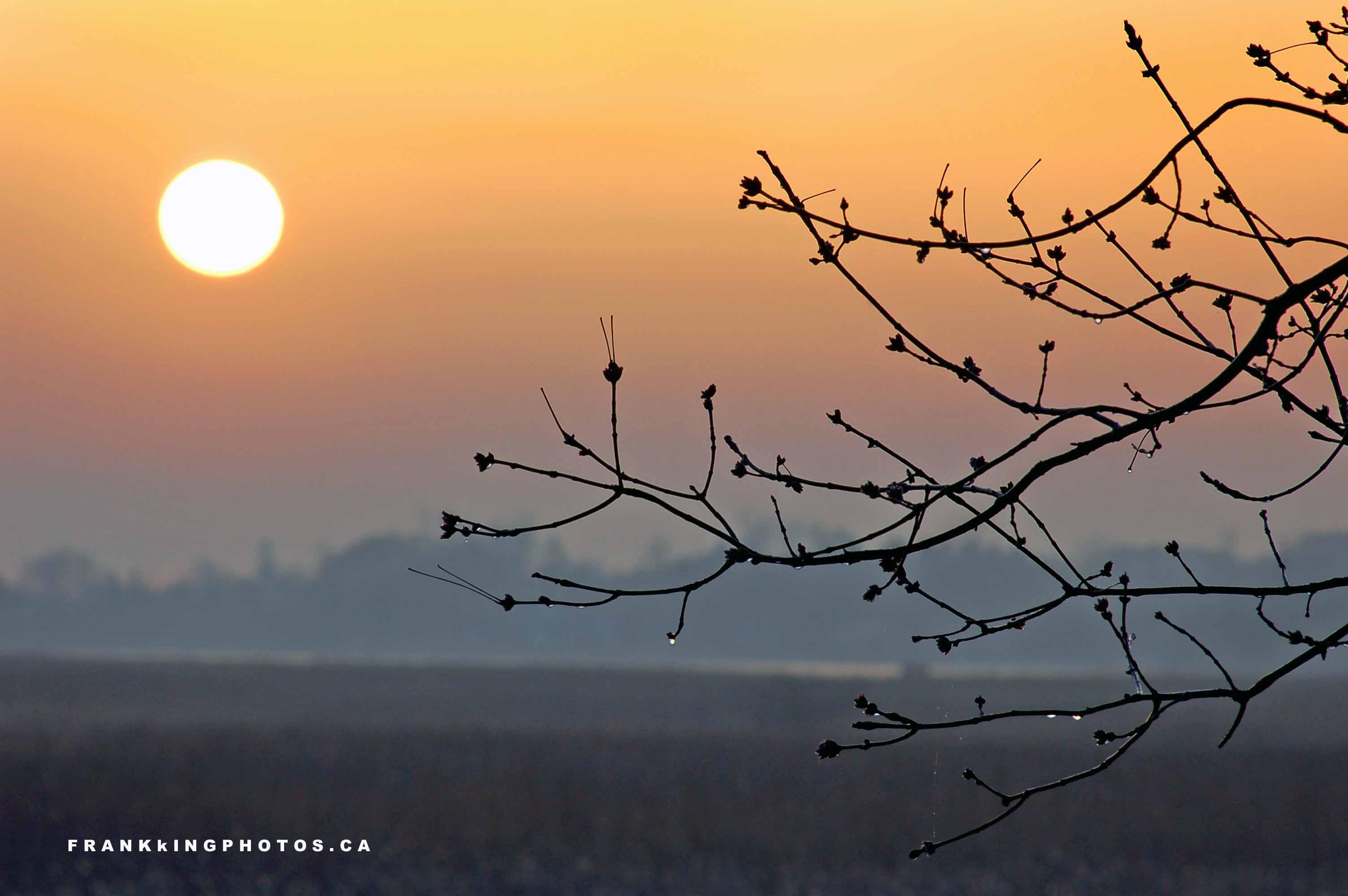 Natural Landscapes The Misty Mornings Of Spring FRANK